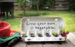 Seedlings growing in reused egg box on bench in garden with hand written sign, grow your own vegetables, recycle and reuse to save money and grow your own food
