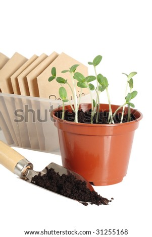Seedlings in pot, garden scoop and seed packets, isolated on white background