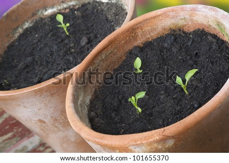 seedlings in rustic flower pots, selective focus