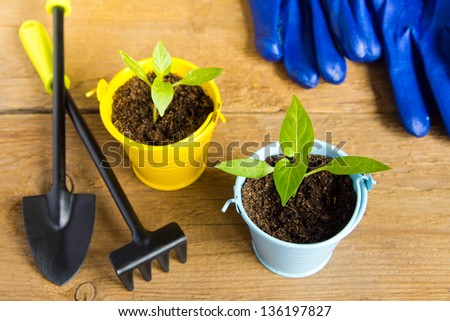 Seedlings of young plants and garden tools on a wooden surface (background). Gardening and spring concept. Copy space.