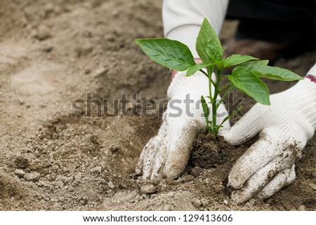 Seedlings, planting, agriculture