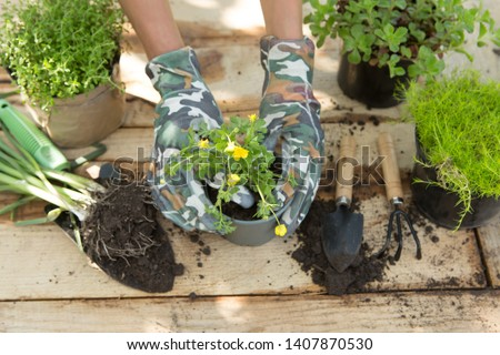 Seedlings, plants in pots and garden tools on the wooden table, green trees blurred background - gardening concept #1407870530