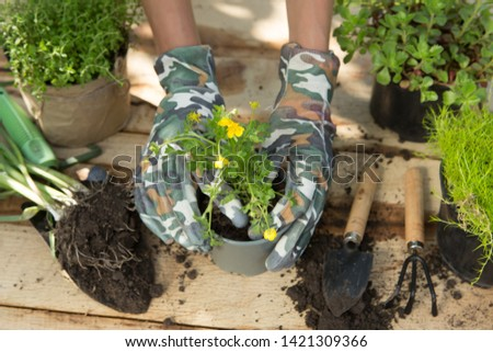 Seedlings, plants in pots and garden tools on the wooden table, green trees blurred background - gardening concept #1421309366