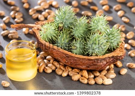 Seeds and castor oil - Ricinus communis Stock photo ©