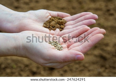 Seeds in a hand on a farm