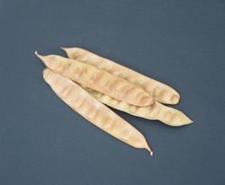 Seeds of Albizia julibrissin, pod of Acacia tree, Persian silk tree, species of tree in the family Fabaceae, native to southwestern and eastern Asia, Lenkoran acacia or bastard tamarind
