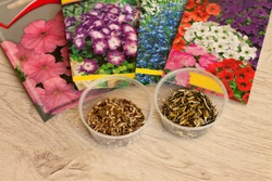 Seeds of annual flowers in bags and in bulk in jars lie on a woodensurface