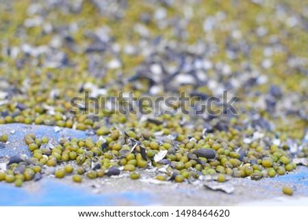 Seeds of mung beans (Vigna radiata) with a black bean shell close-up.