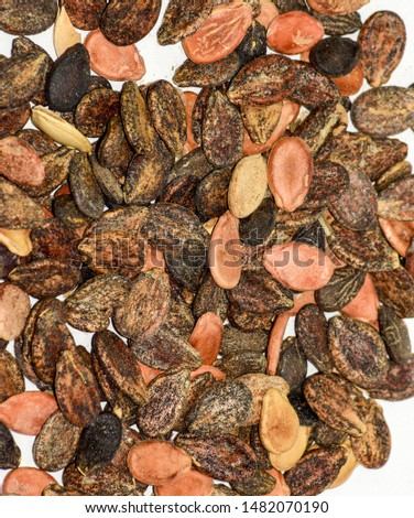 Seeds of watermelon on a white background. watermelon seeds for sowing