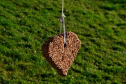 seeds pressed into a heart shape. hanging on a tree branch.Birds go to pick up their favorite sesame sunflower seeds. home made out of love for feathered creatures