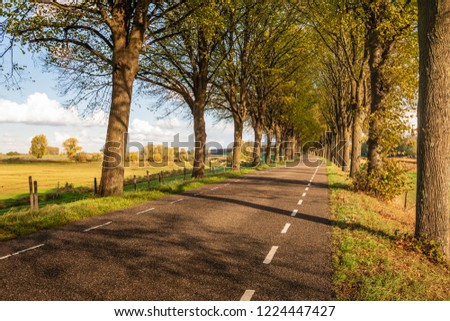 Seemingly endless curved country road with tall trees on both sides. The photo was taken in de province of North Brabant on a sunny day in the Dutch autumn season. #1224447427