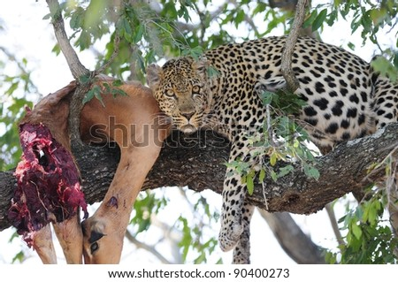 Seen in Kruger National Park, South Africa