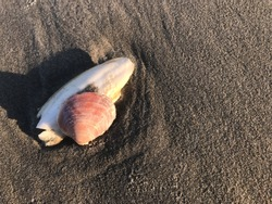 Seeshell and cuttlefish bone on the beach