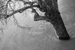 Seine flood and tree in Paris