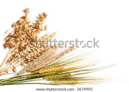 Selection of four different wheats isolated on white.