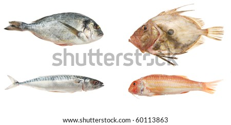 Selection of four fresh sea fish isolated on white