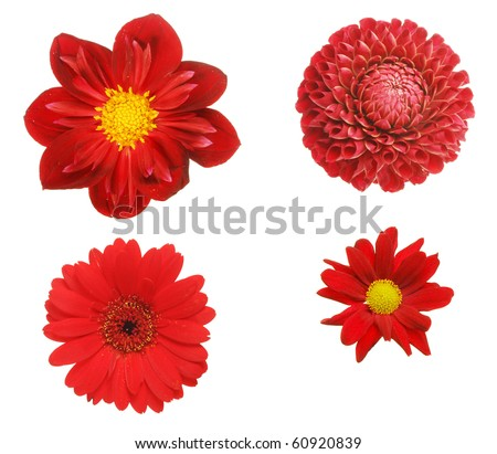 Selection of four red flowers isolated on white