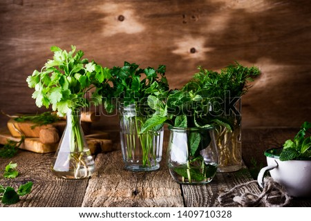 Selection of fresh homegrown organic culinary and aromatic herbs plant in glass jars on wooden background, home gardening, close up, selective focus. Cilantro, parsley, dill, mint