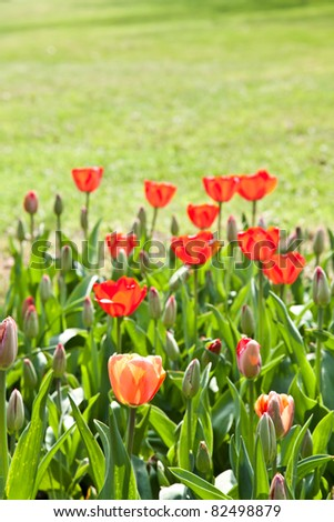 Selection of tulips filled by the sun. All flowers have turned heads to light