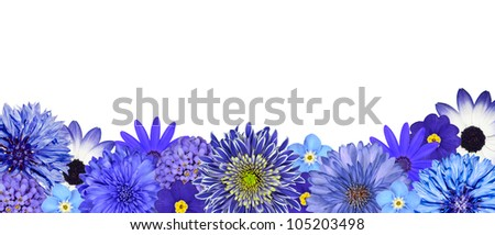 Selection of Various Blue Flowers at Bottom Row Isolated on White Background. Daisy, Chrystanthemum, Cornflower, Dahlia, Iberis, Primrose