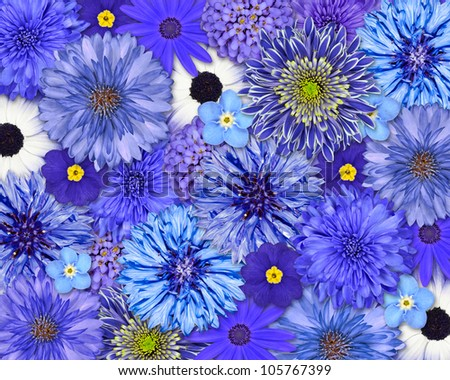 Selection of Various Blue Flowers on top of each other forming blue Background. Daisy, Chrystanthemum, Cornflower, Dahlia, Iberis, Primrose Flowers