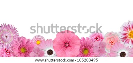 Selection of Various Pink White Flowers at Bottom Row Isolated on White Background. Selection of Daisy, Carnation, Chrysanthemum, Hydrangea, Gerber, Rose, Strawflower, Petunia