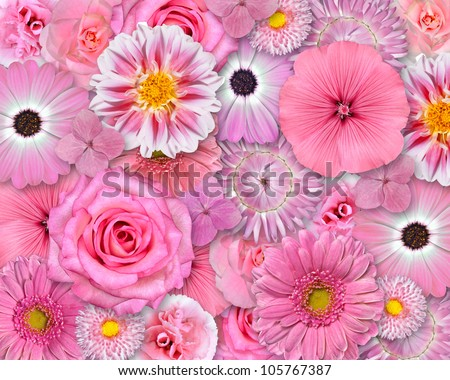 Selection of Various Pink White Flowers on top of each other forming Pink Background. Selection of Daisy, Carnation, Chrysanthemum, Hydrangea, Gerber, Rose, Strawflower, Petunia Flowers