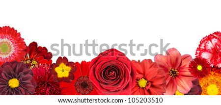 Selection of Various Red Flowers at Bottom Row Isolated on White Background. Set of  Dahlia, Gerber, Daisy, Carnation, Rose, Zinnia Flowers