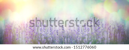 Selective and soft focus on lavender flower, beautiful flower in flower garden  #1512776060