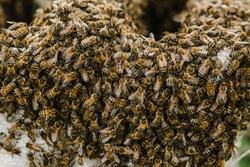 Selective focus. Close up of bees. Swarm of bees, their thousands and the queen bee. Catching the bee swarm. The beekeeper caught a swarm of bees in a box. Beekeeping background. Beekeepers day.