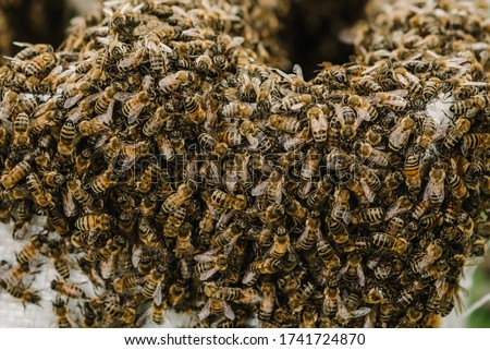 Photo of  Selective focus. Close up of bees. Swarm of bees, their thousands and the queen bee. Catching the bee swarm. The beekeeper caught a swarm of bees in a box. Beekeeping background. Beekeepers day.