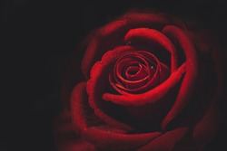 selective focus.Closeup red paper rose.vintage tone