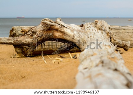selective focus driftwood texture. A snag on the sand of the beach - Shutterstock ID 1198946137
