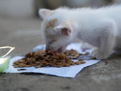 Selective focus in dry food. Street homeless cat eats dry food. Help stray animals, feeding.
