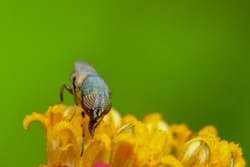 Selective focus Macro image of a hover fly siting on a yellow flower