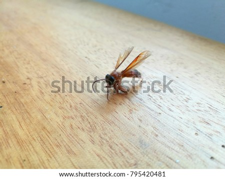 Selective focus of bee on the wooden table #795420481
