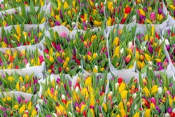 Selective focus of multicolored flower bouquet at market, Tulips form a genus of spring-blooming perennial herbaceous bulbiferous geophytes, Nature floral background, Netherlands.