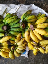 Selective focus of Pisang Raja or Plantains are bananas that are very well known for their sweet taste and are commonly used to make cakes. Famous banana in Indonesia