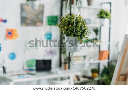 selective focus of selective focus of green hanging potted flower in spacious room #1409502278