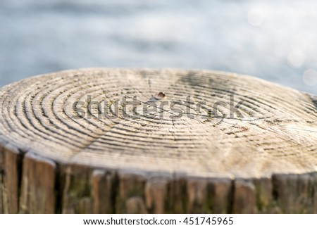 Selective focus on annual ring of timber beside lake