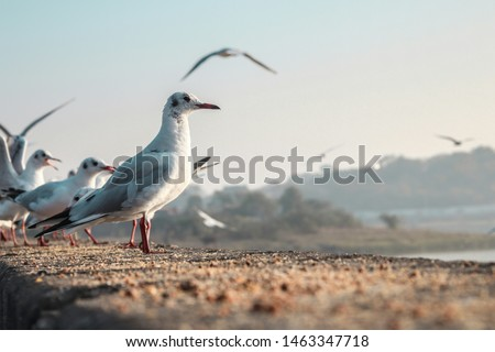 Selective Focus Photo of Seabirds. White Seabirds #1463347718