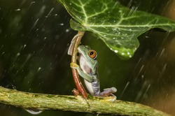 selective focus photography of frog holding leaf