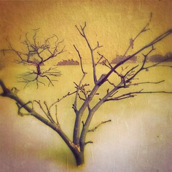 Selective focused photo of leafless tree twig and fake tree made from wire on paper textured background