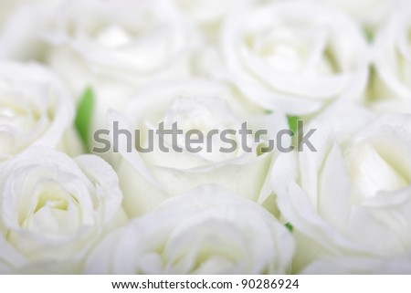 Selective soft focus white roses background.