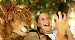 Selfie time in the zoo! People and holiday concept. Cute girl with her  friend lama making selfie, smiling and have fun in the contryside. Cool weekend