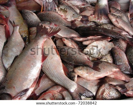 Selling fresh fish