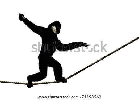 Semi-Silhouetted Monkey Walking on Rope