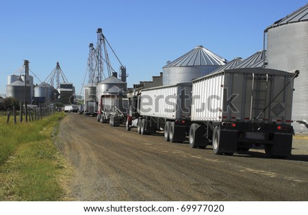 Semi trucks line up to haul grain from the silos.