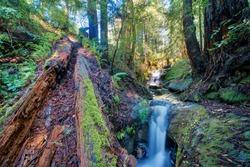 Sempervirens Falls in Big Basin Redwoods State Park