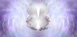 Sending you pure unconditional love and spiritual healing energy - female cupped hands emerging from an angelic pale lilac ethereal  energy background